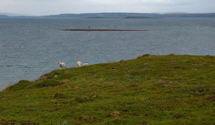Kuvan lampaat ovat norjalaisia, eivätkä varmaankaan merinoa.